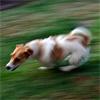 Čo  platí na hyperaktívneho psíka