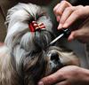 Psia kozmetika: pes a hygiena