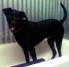 Psia kozmetika: veterinárne prípravky