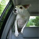pes-autonehoda.jpg