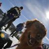 Psy a naše gestá