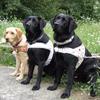 VŠVP: Ako pes pomáha zrakovo postihnutým