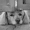 Dovolenka bez psa