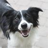 7. bodov ako udržať psíka šťastného