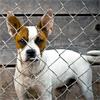 Strážne psy a odhalenie pravdy o ich zvýšenej agresivite