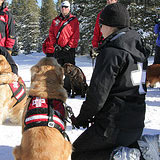 Úvod do výcviku psa